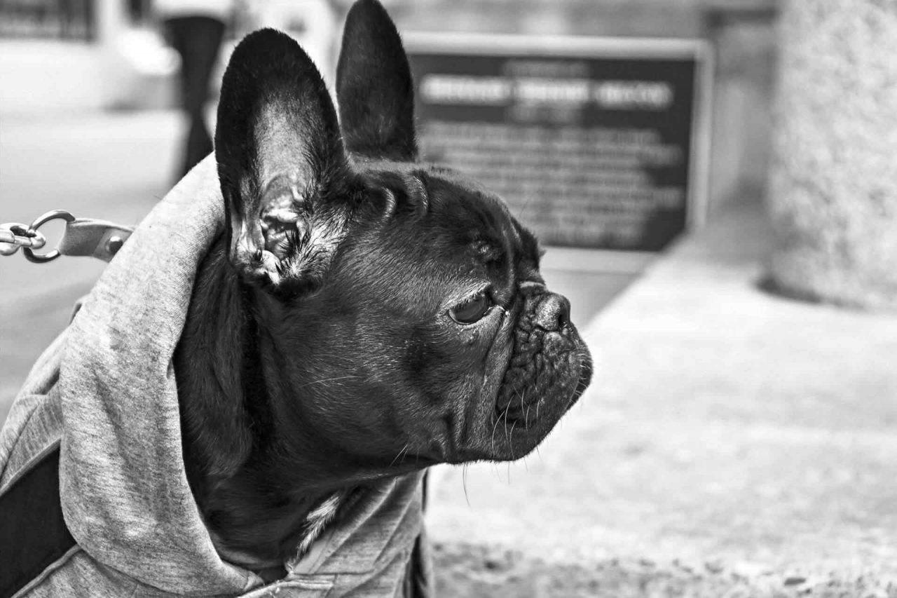 https://gunmag.com.ua/wp-content/uploads/2017/05/PETS-dog2-1280x853.jpg