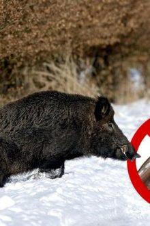 Запрет на охоту: где он действует, и чего ожидать охотникам