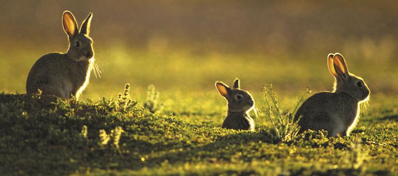 Украинские кролики. Рассвет или закат?
