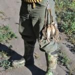 даже на летней охоте по перепелу сапоги лучше любых ботинок
