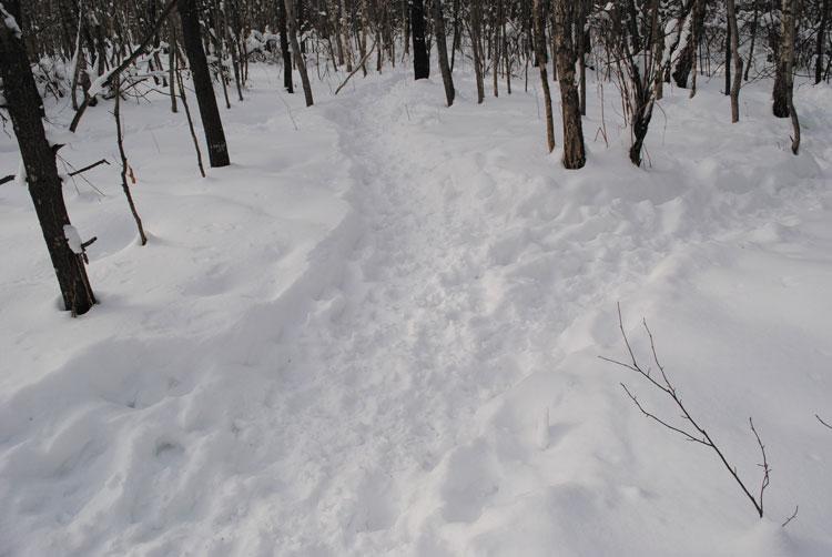 Тропы, набитые гуртами кабанов при переходах с дневки на кормежку и обратно. Январь 2011 г.