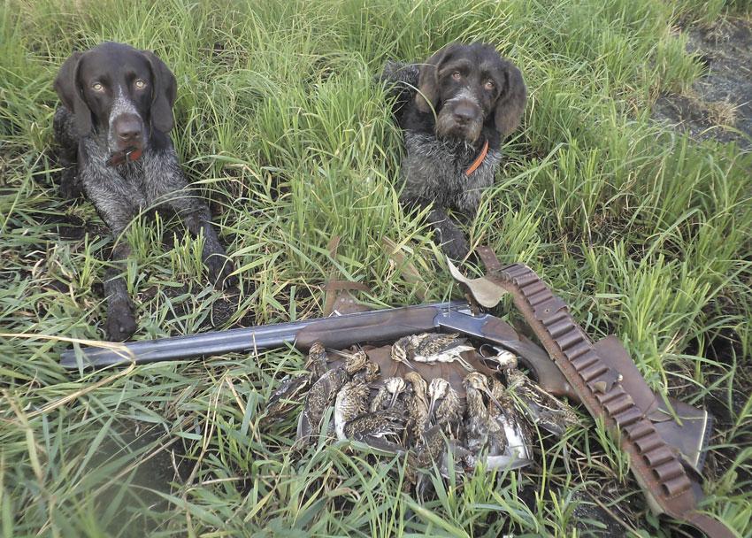 Пустой патронташ— признак удачной охоты на бекаса